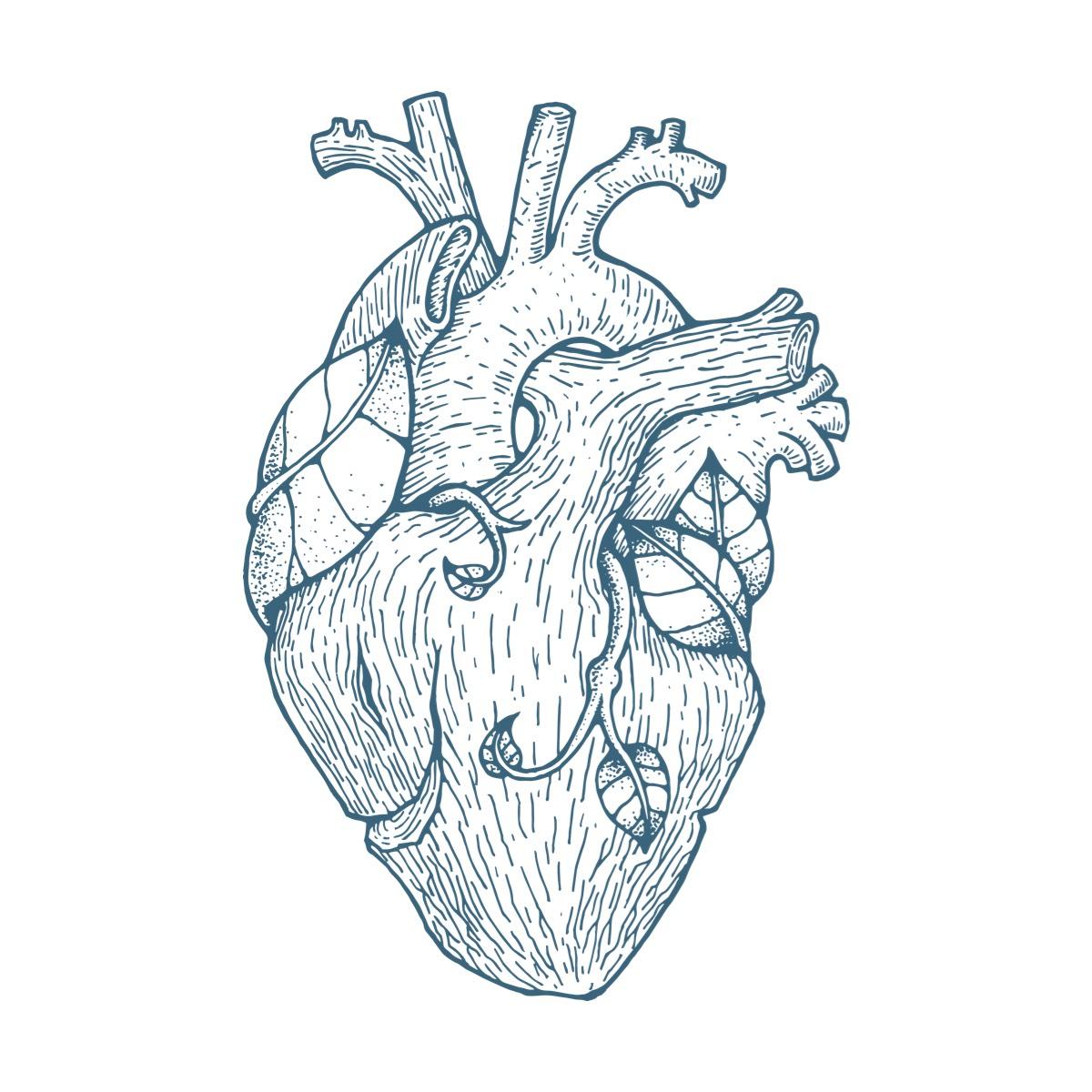 tree heart 樹心
